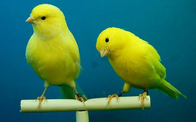 Deployment Styles: Blue/Green, Canary, and A/B